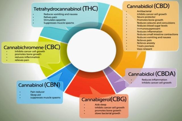 cannabis-uses